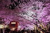 樱花季韩国留学